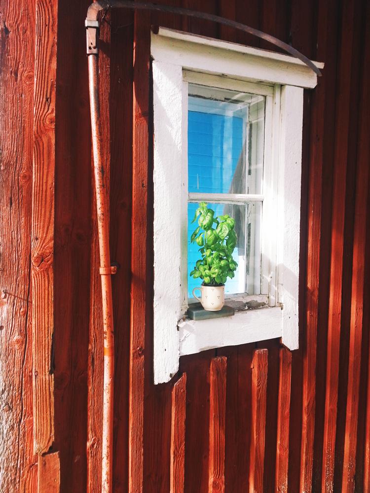 viikate_basilika_punainen_tupa_yrtti_ikkunalauta_rimalaudoitus_50_luku_ulkovuoraus_punamulta_maali_visit_finland