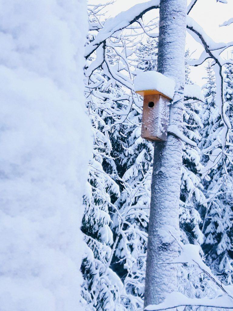 linnunpontto keskitalvi kuura frosted bird house silent pure forest