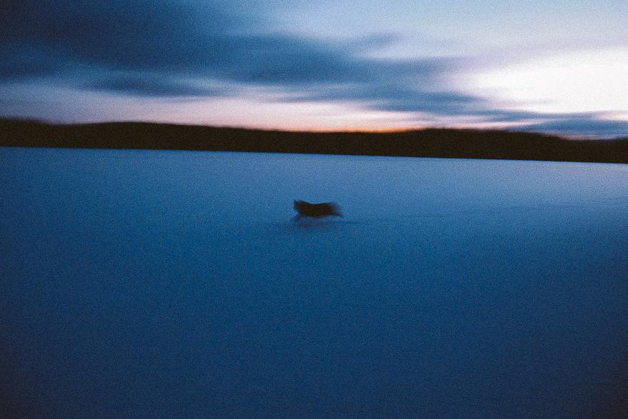 koira juoksee hamaralla jarven jaalla elain hahmo on ice finland mystic blue dark sky