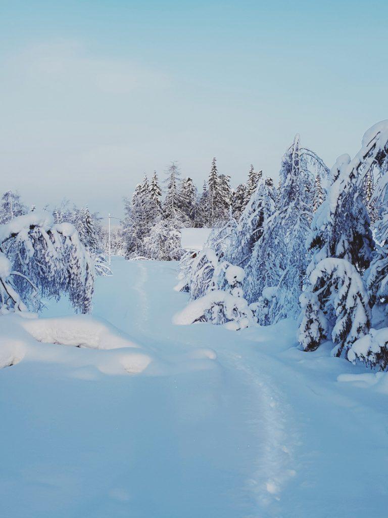 hiljainen-talvi-maisema-naulavaara
