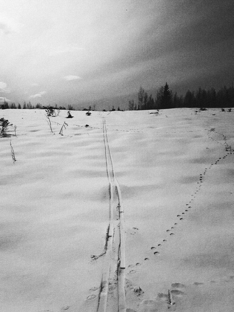 hakkuu-aukea-raiskio-aukio-metsatalous-raiskattu-forest-rape-cut-down-trees-empty-space-musta-valkoinen-lumi-hiihto-jalki-lumella