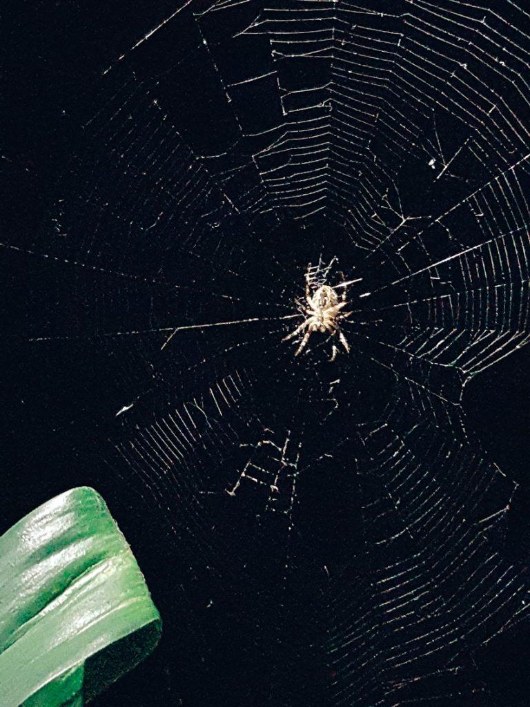 hamahakki-ristilukki-spider-web-lowkey-detailed-verkko-yksityiskohtainen-tarkka-kuva-hamahakki-verkossa-kudonta
