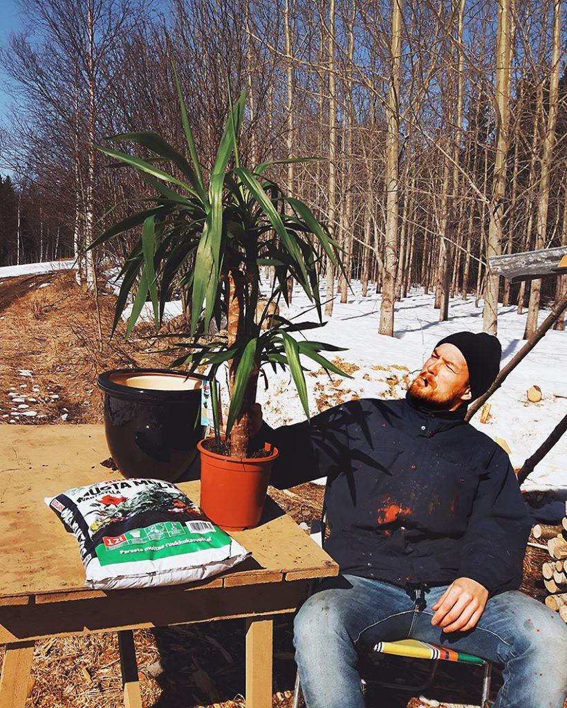 jukka-palmu-yucca-palm-istutus-planting-ulkona-ruukkuun-biolan-musta-multa-kainuu-live-authentic-carrhart-wip