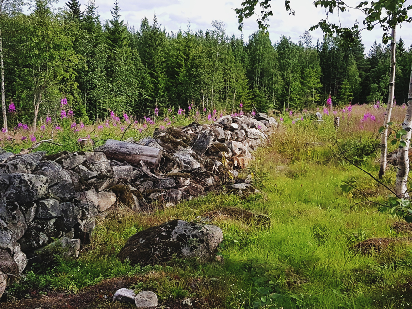 kiviaita-vanha-kivi-aita-muuri-hakkuuaukio-haka