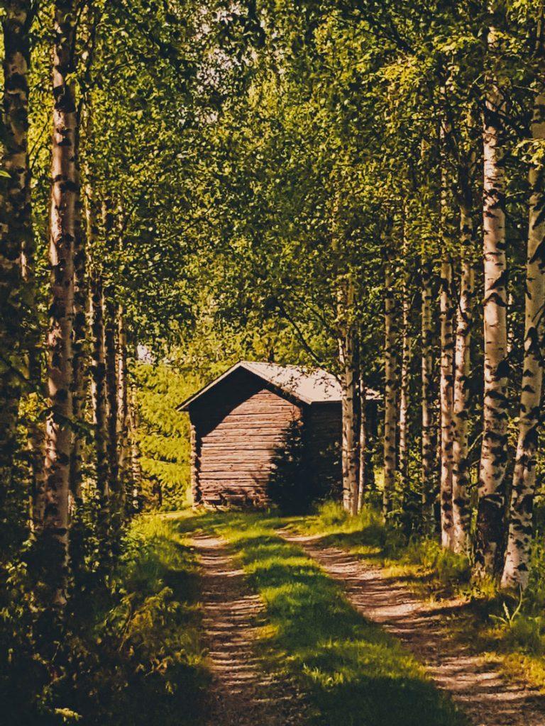 koivukuja-koivuja-kujalla-riihi-hirsinen-rakennus-aitta-hirsiaitta-maaseutu-maisema-tunnelma-kesa