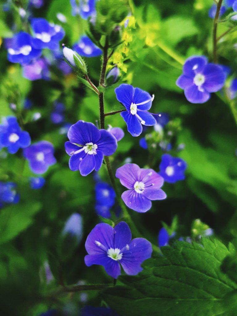 kukkia-niitty