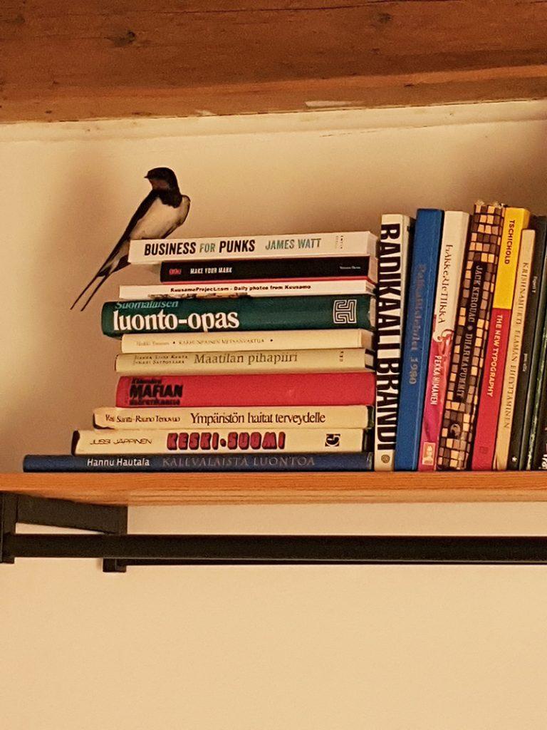paaskynen-sparrow-lintu-sisalla-inside-kirjahylly-bookporn-bookshelf