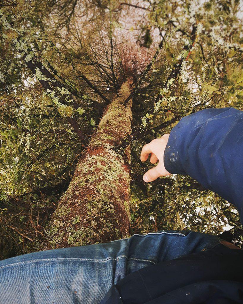 puu-kiipeily-tree-climbing-pine-tree-kuusi-suomi