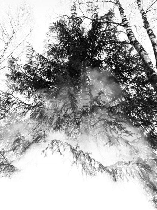 savupilvi-sauva-kuusikko-puun-latva-nuotio-525x700