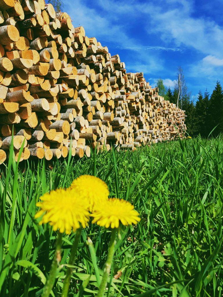 voikukka-puupino-aurinko-kesa-kesalla-vihrea-nurmikko-sininen-taivas-pilvet-karkaavat-kauas-suomalainen-maisema
