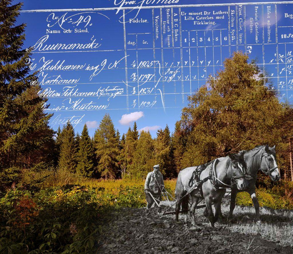 ruunamaki-sotkamo-naulavaara-historia-hevos-pelto-pellon-teko-vanha-asuinsija-paikka-pientila-pellonraivaus-kaski-kainuu-valokuva