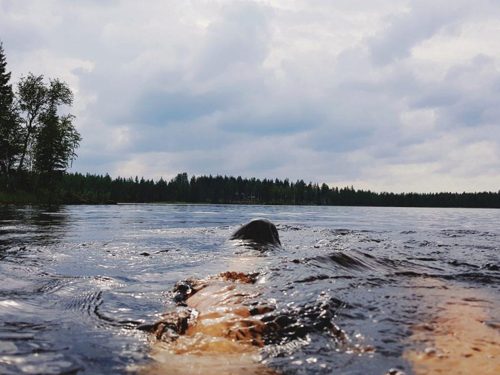 suomi-uinti-avovedessa-jarvi-kesahelle-lammin-jarvivesi-lampi-aurinko-tummat-pilvet-nousee