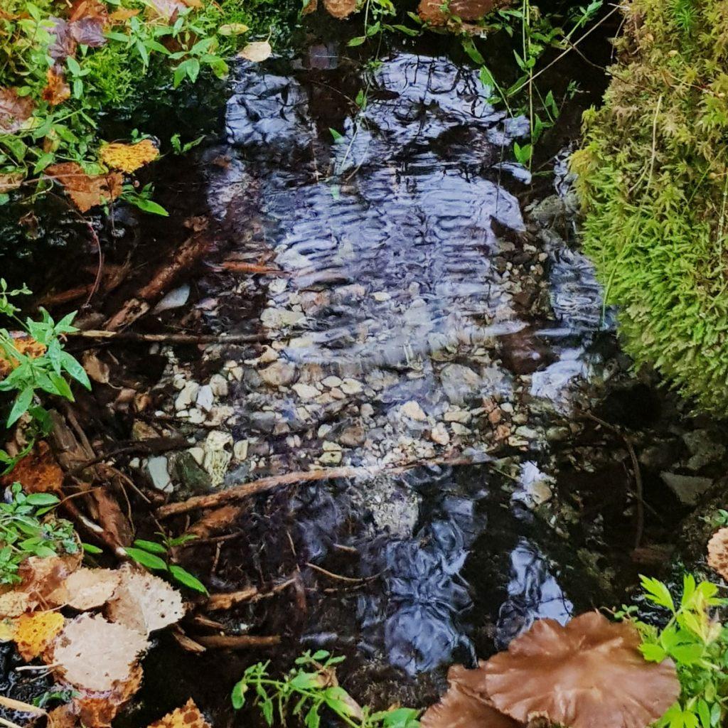 lahde-vesi-spring-pienia-puhtaita-kivia-lahteikon-pohjalla-puro-kainuu-finland-purest-water-clear