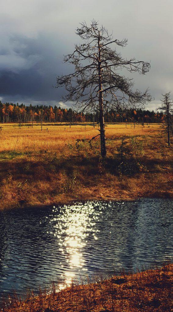 maisemakuva-luontokuva-kainuu-sotkamo-suoluonto-ruska-tummat-pilvet-kelo-manty-koskematon-luonnontilainen-lampi-veden-valke-rauhallinen-varikas