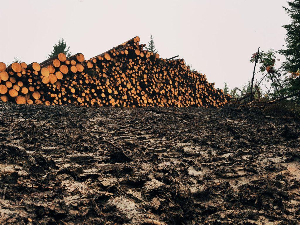 metsakoneen-ura-jaljet-metsassa-pohjassa-tuho-hajottaa-mattaat-puupino-muta