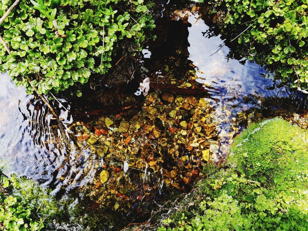 puhdas-kuin-puron-vesi-lahde-puro-pieni-finnish-spring-clear-pure-water-stream-kivia-pohjalla-hiekka-pohja-nakyy