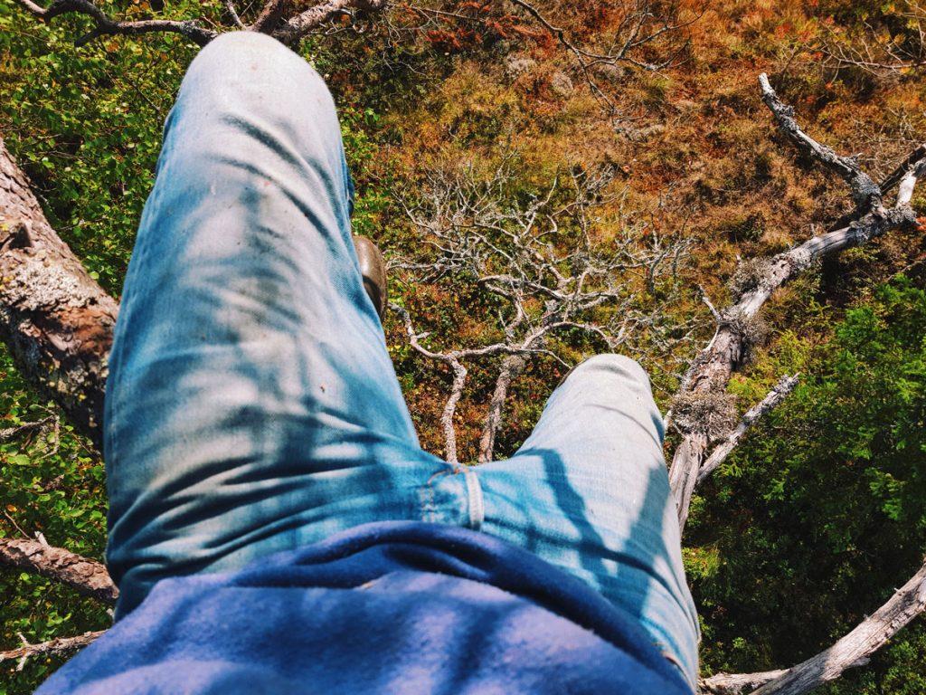 puuhun-kiipeaminen-climbing-tree-manty-katse-alas-levi-levis-501-jeans-rugged-in-nature-hiking-suomiretki