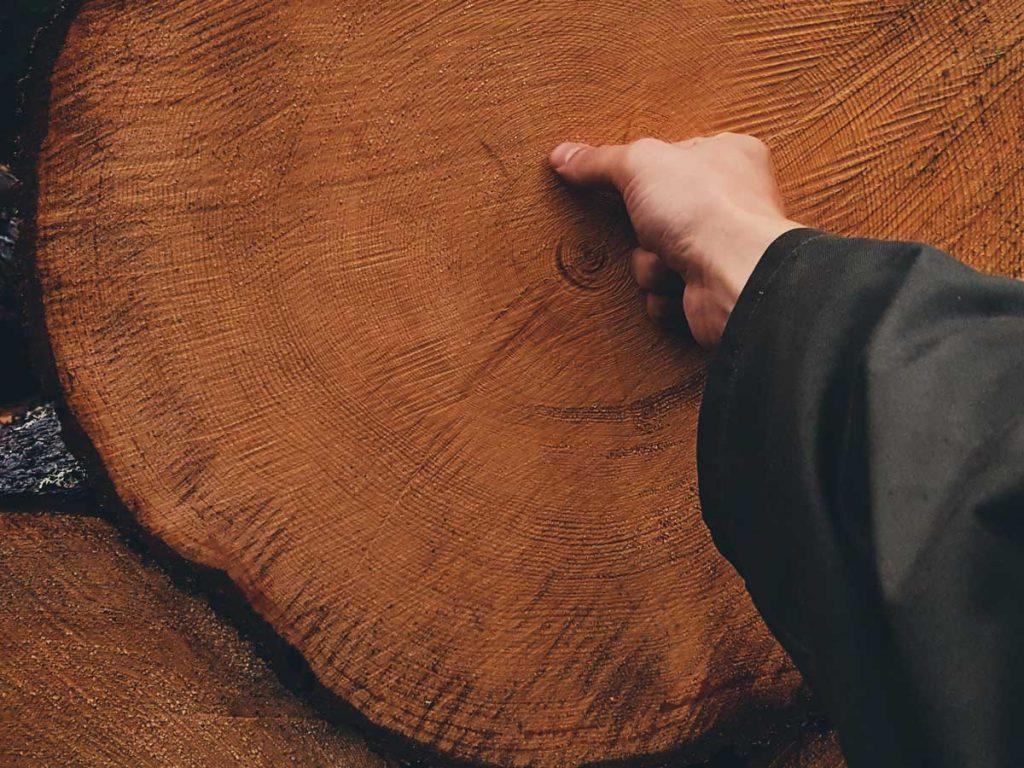 vanhojen-metsien-hakkuu-vanha-paku-runko-150-vuotias-kaadettu-tuhottu-tukki-manty