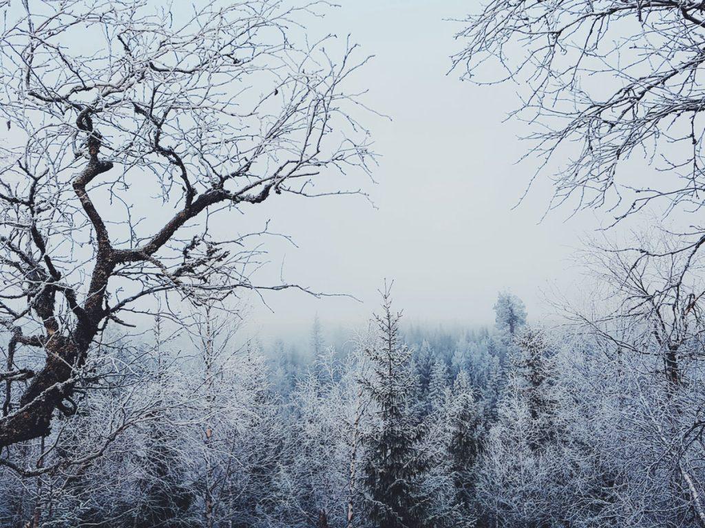 kuura-maisema-yli-puun-latvonen-tunturikoivu