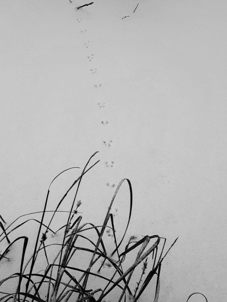 hiiren-myyran-jaljet-lumella-jalkikirjasto