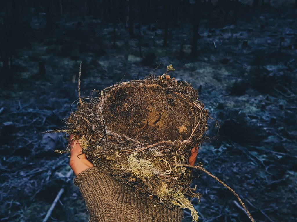 linnun-pesa-pudonnut-puusta-kulho-harvennus-hakkuu-tahteet-nuori-kasvatusmetsa-kuusikko-ruma-metsatalous