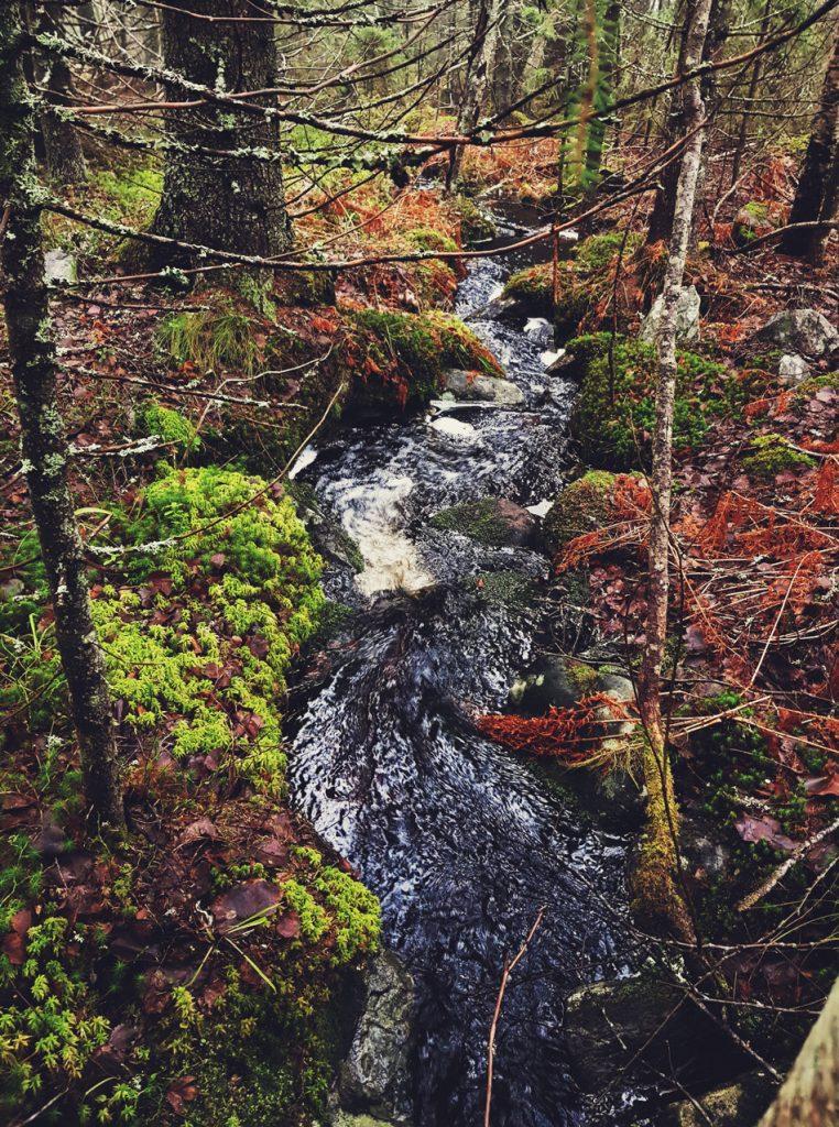 luonnon-puro-metsassa-virtaava-pieni-kivikkoinen-lahde-puro-noro