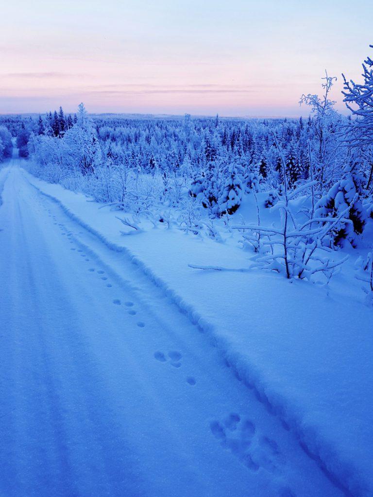 janiksen-jaljet-vaara-maisema-kainuun-talvinen-maisema-vuokatin-vaarat-kaukaa-katsottuna-punertava-taivas