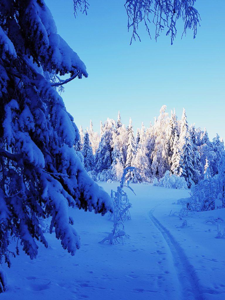 kevat-aurinko-tykkypuiden-kuusten-latvassa-latu-metsasuksi
