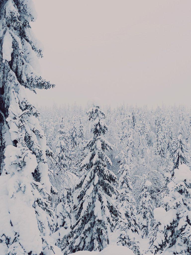 sotkamo-luminen-vaara-talvivaara-naulavaara-tykky-puu-kuusikko-maisema-kainuu