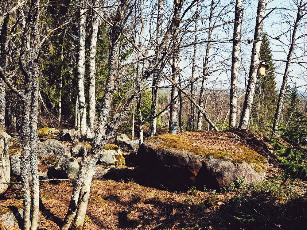 kivikko-louhikko-koivikko-sulana-maa