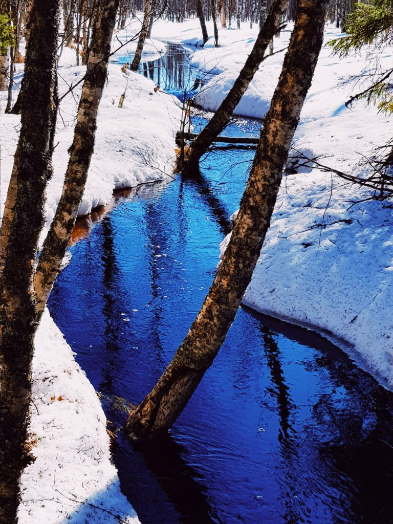 sininen-puro-vesi-virtaa-kevat-majava-vaikutus-koivu-puu-puron-kaartuu-ylle