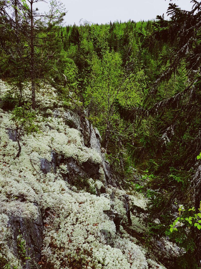 sammal-pintainen-kallio-kevaan-ensi-lehdet-vihrea-vehrea