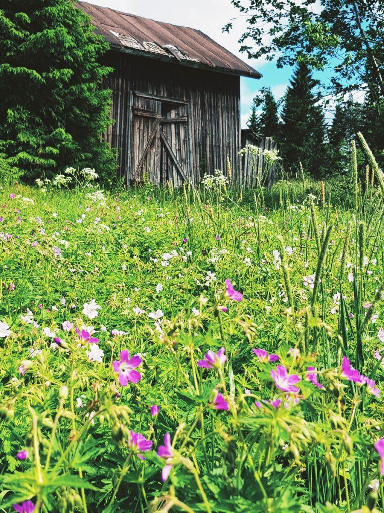 aitta-kukka-niitty-keto-vanha-harmaa-rakennus-pihapiiri