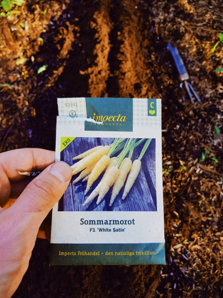 impecta-fröhandel-sommarmorot-f1-white-satin-porkkana-valkoinen-siemen-luomu-kylvo