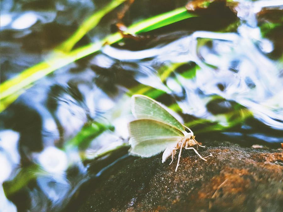 perhonen-kivella-puron-varrella