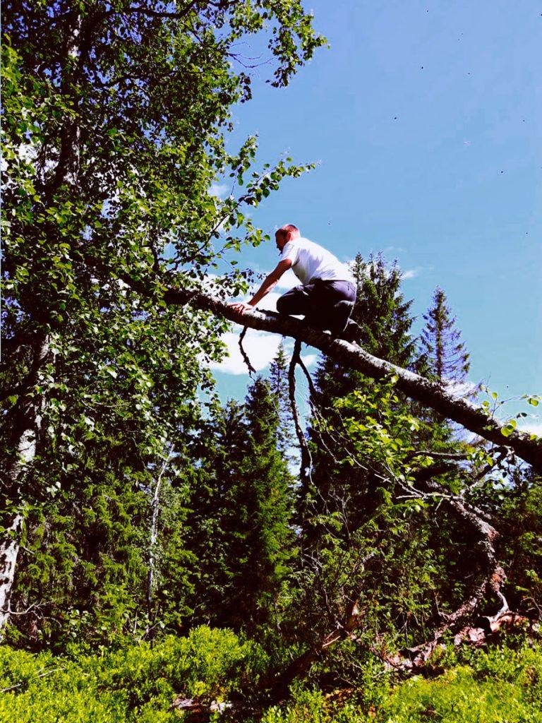 vaara-kuusikko-kaatunut-koivun-kiipeaminen-runkoa-pitkin-kesa