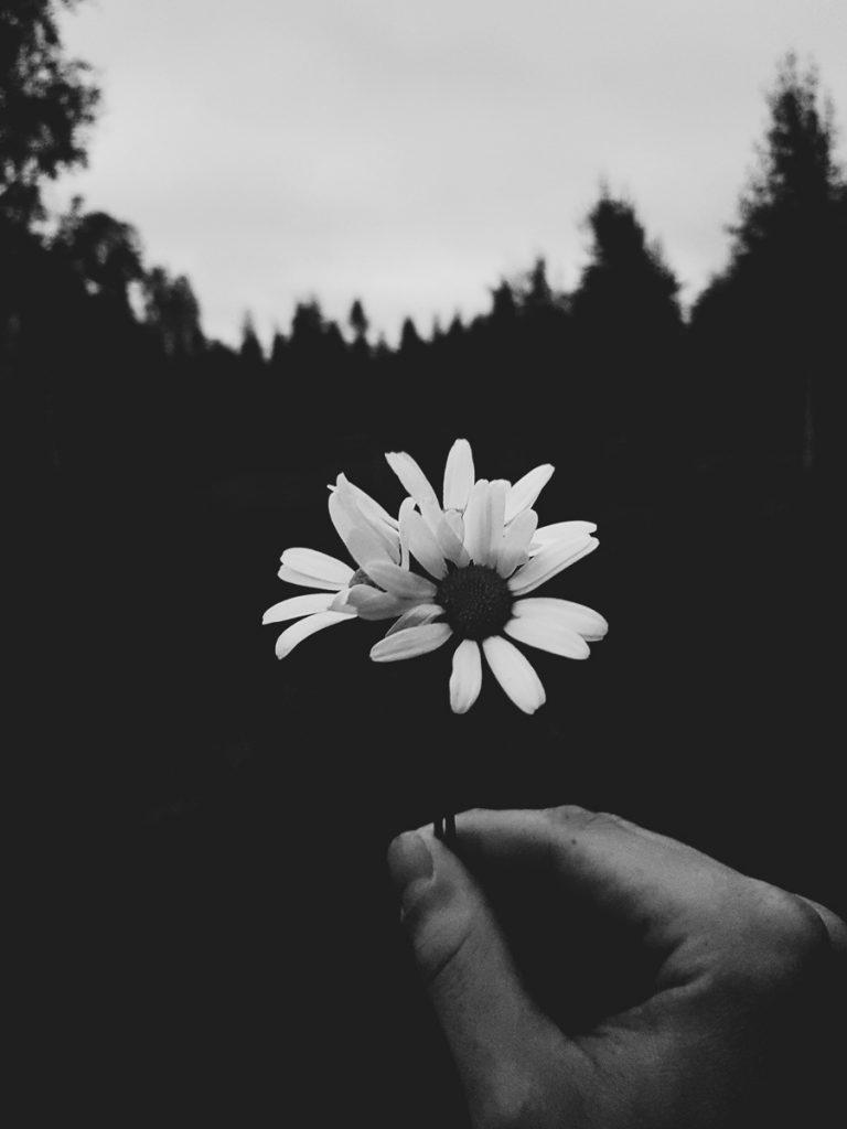 mustavalkoinen-paivan-kakkara-kuva-kukka
