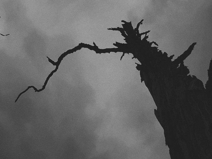 mustavalkoinen-siluetti-kelo-puu-kappyra-oksa