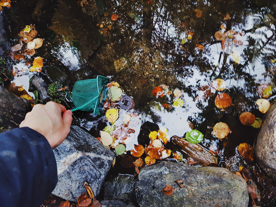 juoma-lahteen-puhdistus-lehdista