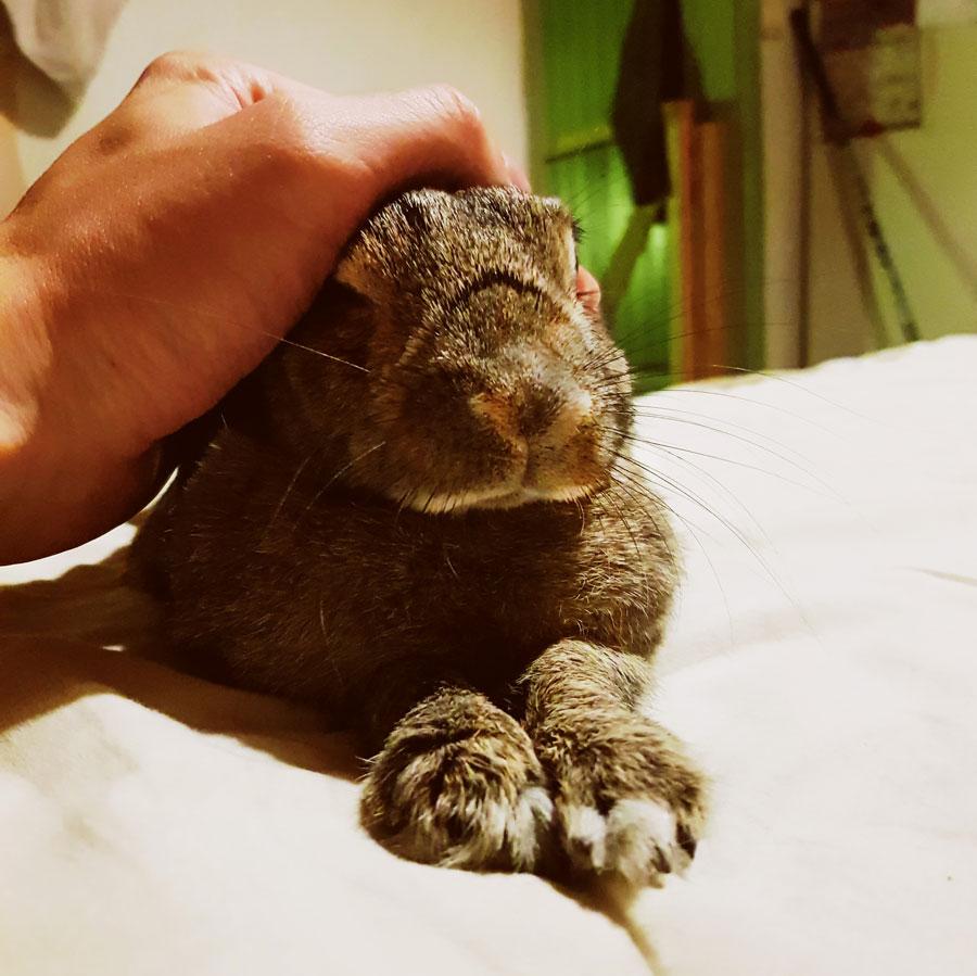 kani-sangyssa-free-roaming-bunny-rabbit