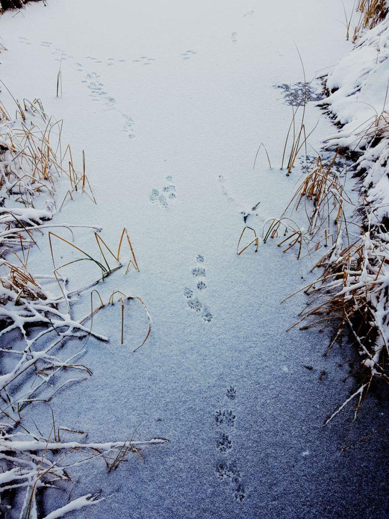 lumikon-jaljet-jaalla-lumella-lumikko-jalkikirjasto