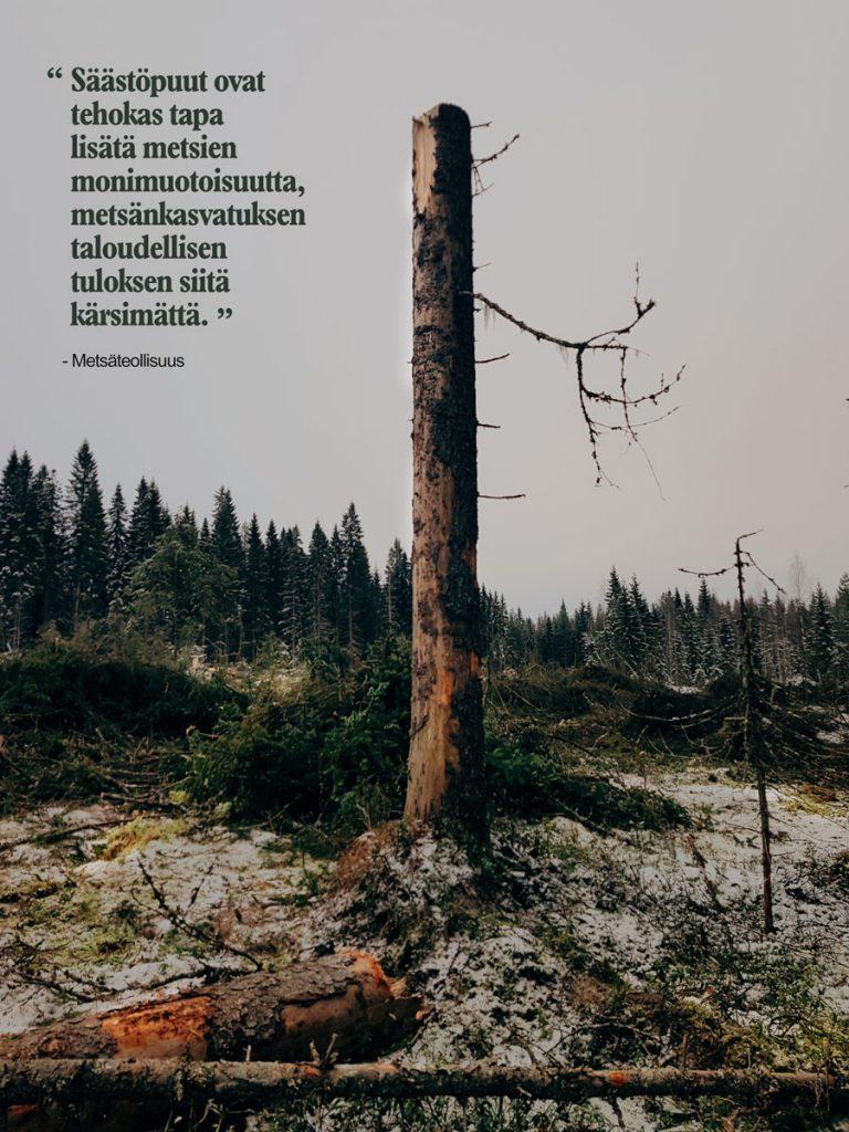 monimuotoisuus-metsa-hakkuu-pystyyn-jatetty-puu-metsateollisuus-saastopuu-lores
