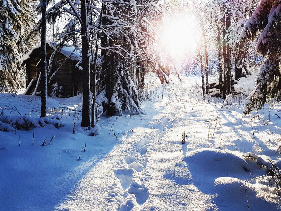 lumi-sateen-jalkeen-sotkamo-pehmeaa-puuteri-lunta-aurinko-paistaa-vastavalo